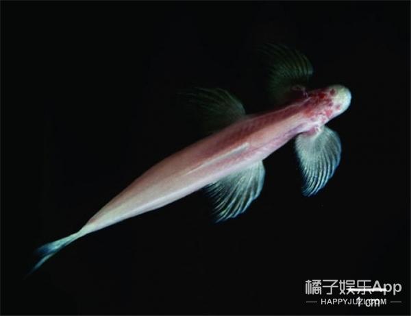 别跟我开玩笑,这长着4条腿还能走路的家伙竟是条鱼?!