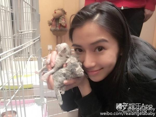 范冰冰的加菲、吴亦凡的泰迪、鹿晗的英短…带你看看明星的宠物啊