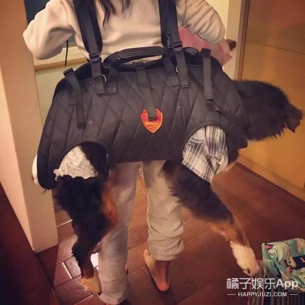 【奇葩买家秀】把巨型犬背上身,狗狗一脸生无可恋!