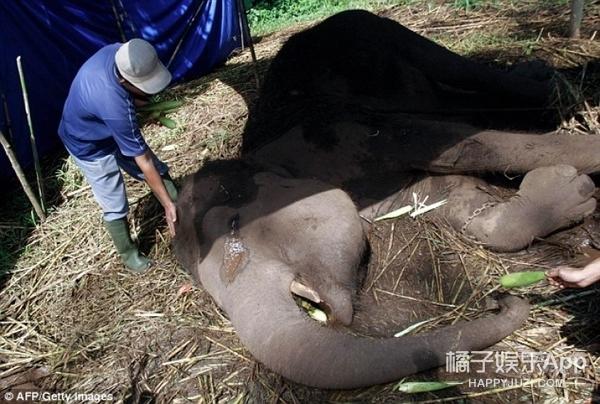 动物园一头大象去世了,临终时泪流满面让人心疼!