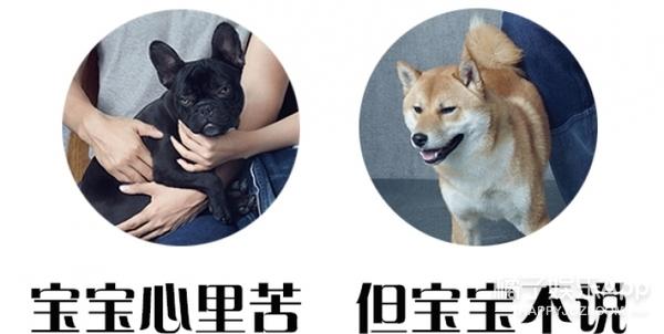 【时装片】袁弘&张歆艺合体,一起放终极虐狗大招啦!