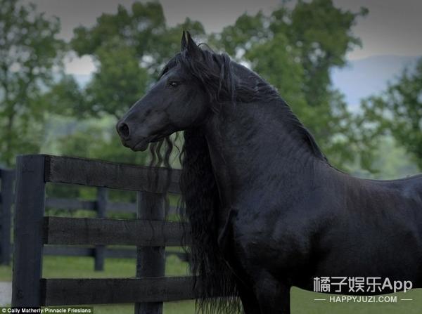 马中贝克汉姆,这应该是世界上最帅的一匹马了!