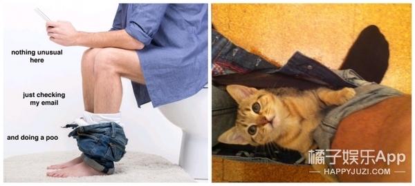 养猫前VS养猫后,你懂的