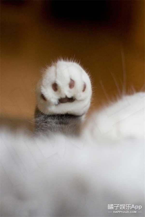 【萌宠】这些动物的前脚掌也太萌太治愈了吧
