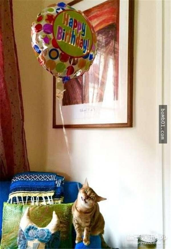 【萌宠】当高冷喵星人遇上气球,这画面笑cry