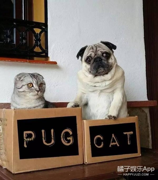 【萌宠】一猫一狗,一家四口