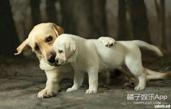 【真相帝】基因决定汪星人是人类最好的朋友