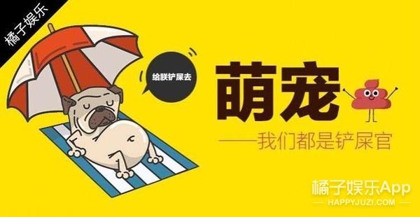 【萌宠】胖狗的世界你们不懂