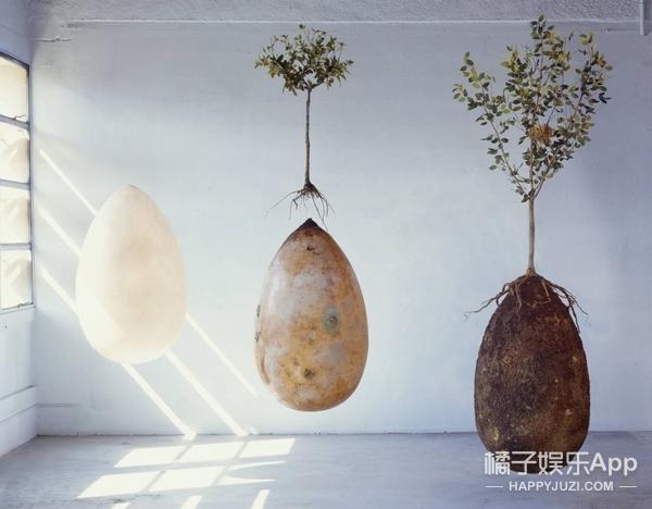 设计师新发明:死后你可能会以蛋的形式变成一棵树!