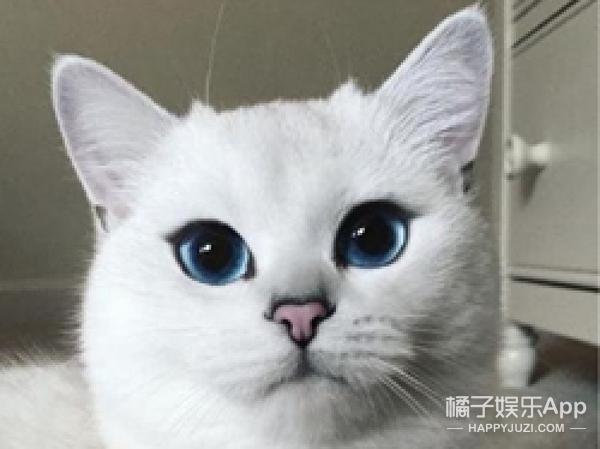 【萌宠】美!自带眼线美瞳,这只喵萌到我呼吸困难!