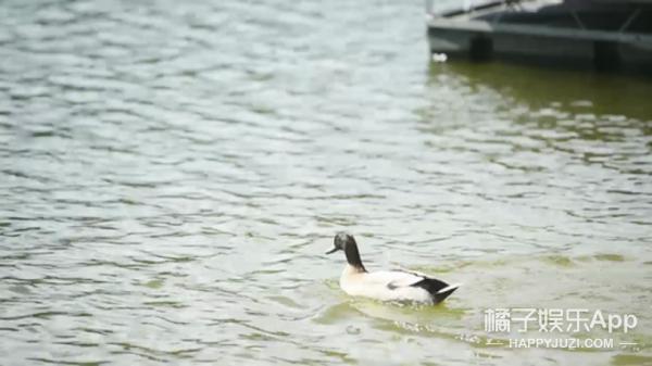 这鸭子是个人来疯,看见船就想霸占,但大伙都爱它!