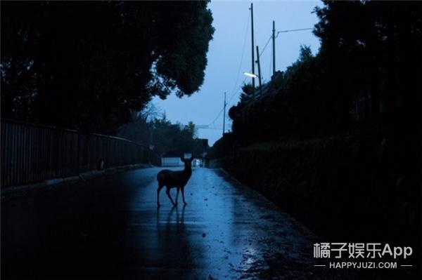 日本摄影师拍奈良的鹿:希望有一天它们生活在没有人的地方