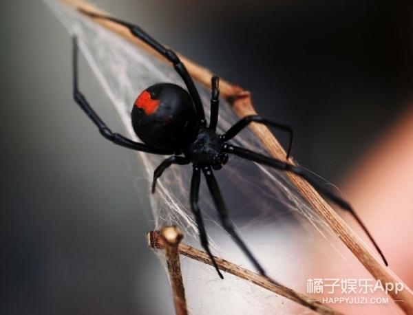 为知道被哪些毒物咬最痛苦,他亲身试毒被毒蛇、蜘蛛、水母咬到瘫痪!