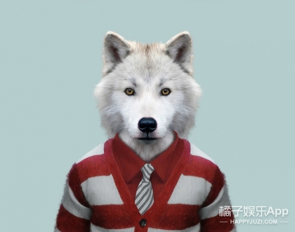 北极狼,不同的动物穿的衣服的气质是完全不一样的!有点像单身狗!