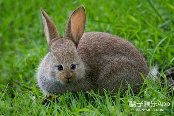假如动物的眼睛长在前面,原谅我笑点低!