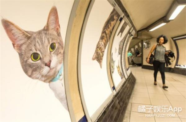 天了噜,伦敦地铁站被喵星人占领了,萌哭