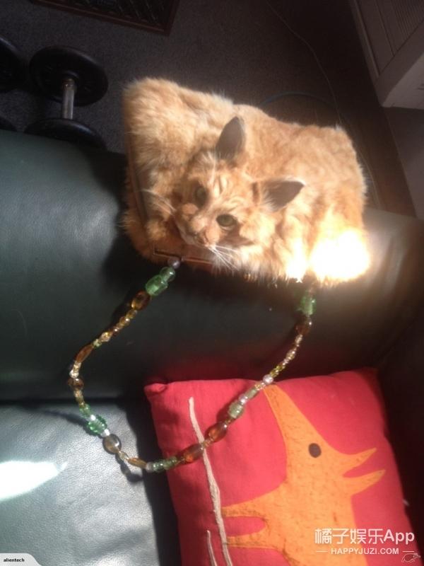 她在网上拍卖用猫做的包,哪门子时尚?