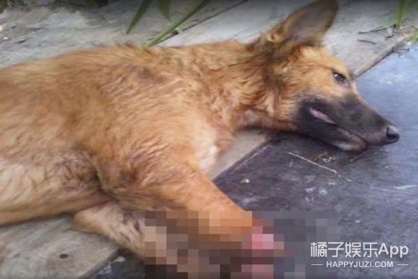 他们给这只残疾狗狗装上假肢,让他重新恢复了对生活的希望……