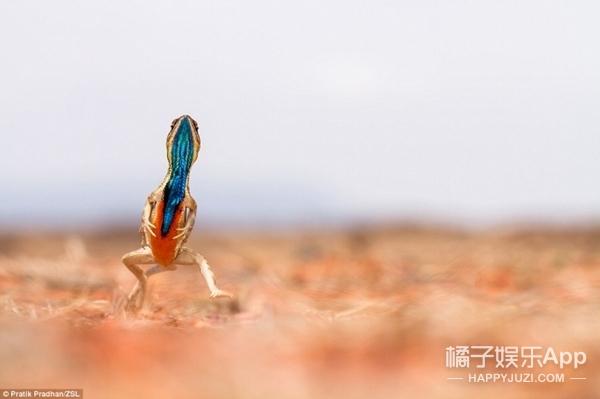 忧郁的狒狒、欢脱的蜥蜴...这十张照片赢得了野生动物摄影大奖赛
