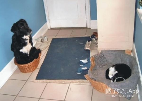 在这场猫狗争夺战中,喵星人完全KO各种汪!