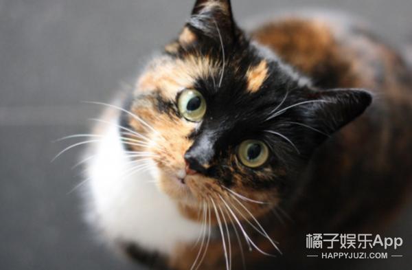 她去拜访死去的爱猫,拍下神奇景象感动千万人