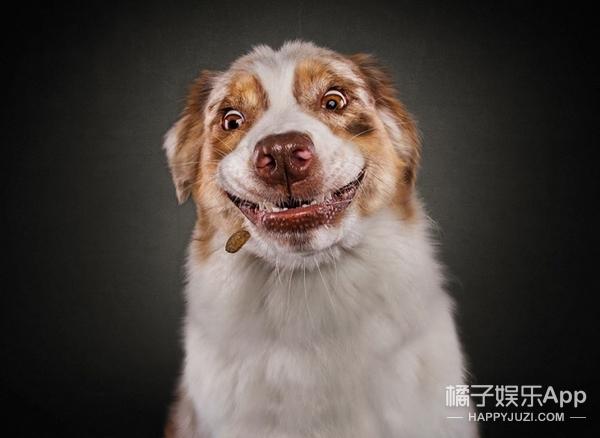 这就是我看到好吃的时候的表情,你们人类满意了吧!