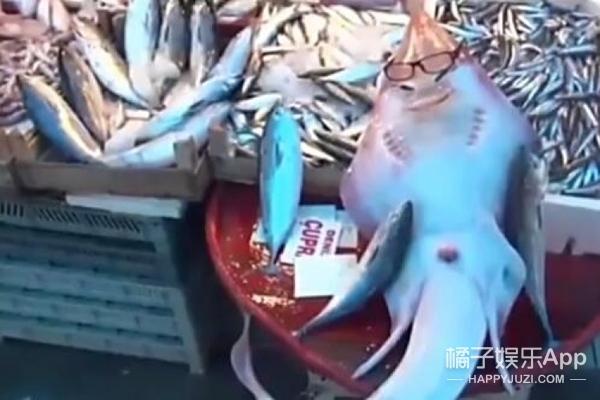 """土耳其渔民打捞""""人脸鲨鱼""""展现迷之微笑"""