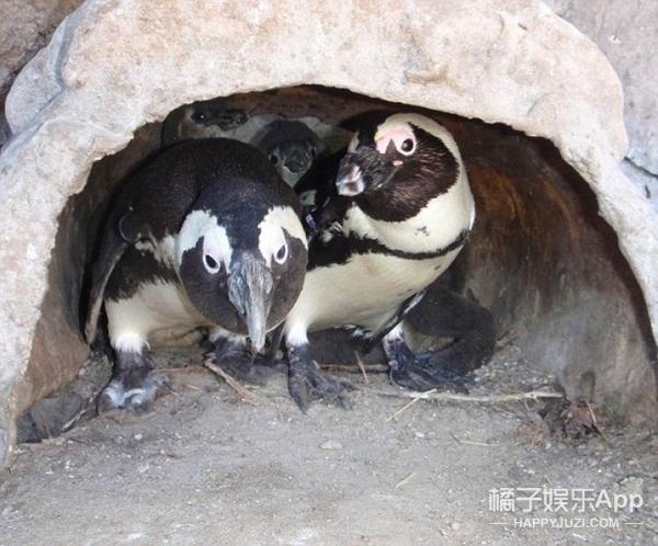 俩小孩深夜溜进海洋馆偷走濒危企鹅,只因想给它自由