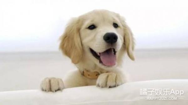 【真相帝】为什么狗改不了吃便便?