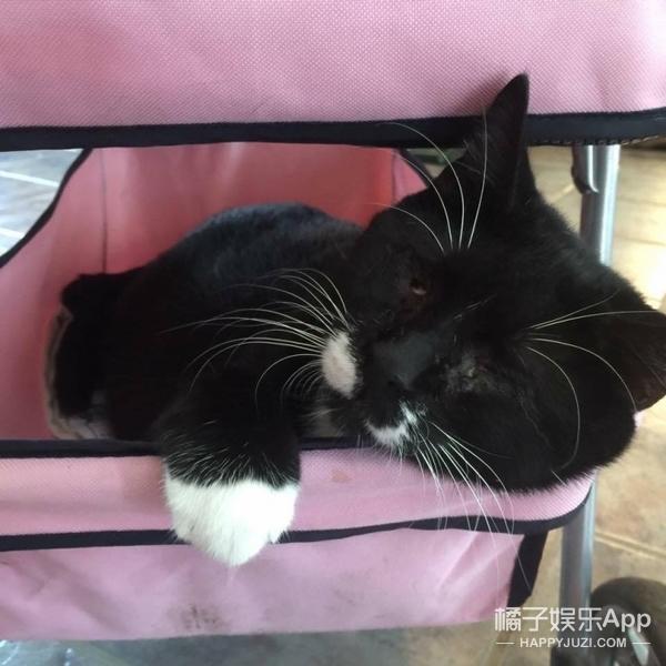 和其它猫一样能躲避障碍的它竟然是盲猫?它的身世也是有点小凄惨