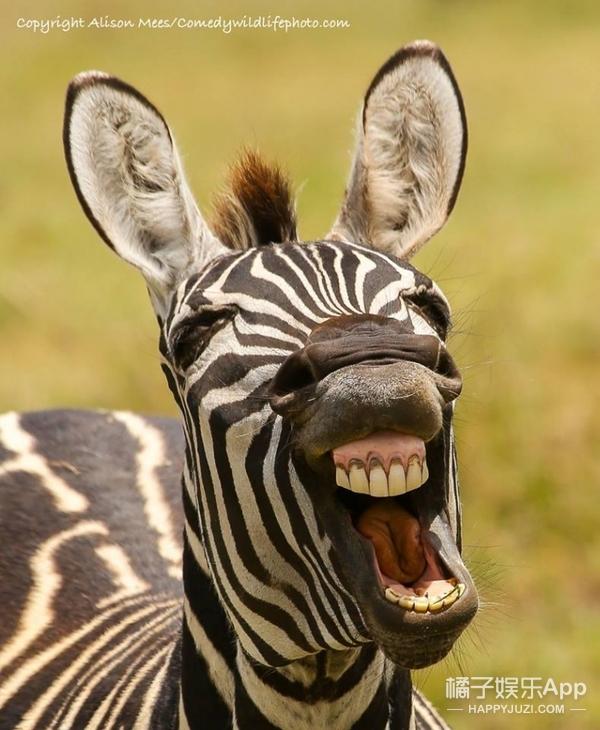 无头企鹅、爆笑狮子、卖萌猫头鹰…能获喜剧奖的动物是有两把刷子的!