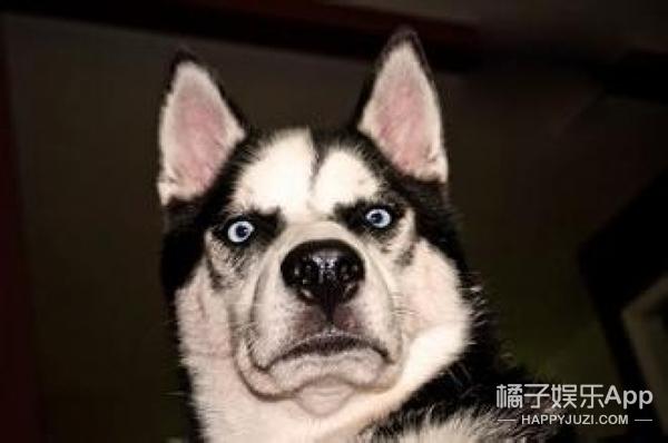 【真相帝】狗狗的心跳会和主人同步?原来养狗狗的好处这么多!