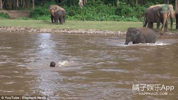 动物世界的感人瞬间!原来万物皆有灵