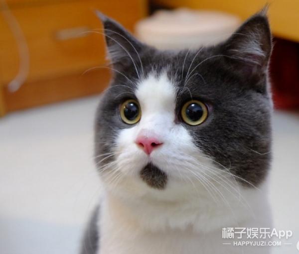 【橘蜜卧谈会】比失恋更蓝瘦香菇的是我的大脸之痛!