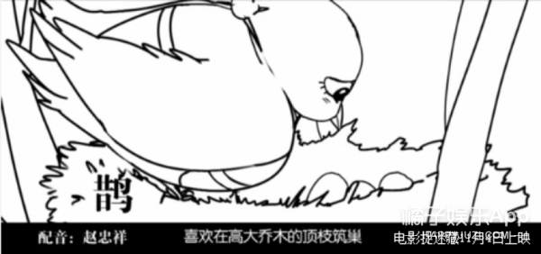 霍建华搭赵忠祥,《捉迷藏》竟然能用《动物世界》完美解释!