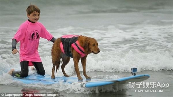 美国有只金毛天天陪残疾孩子冲浪,果然汪界暖男