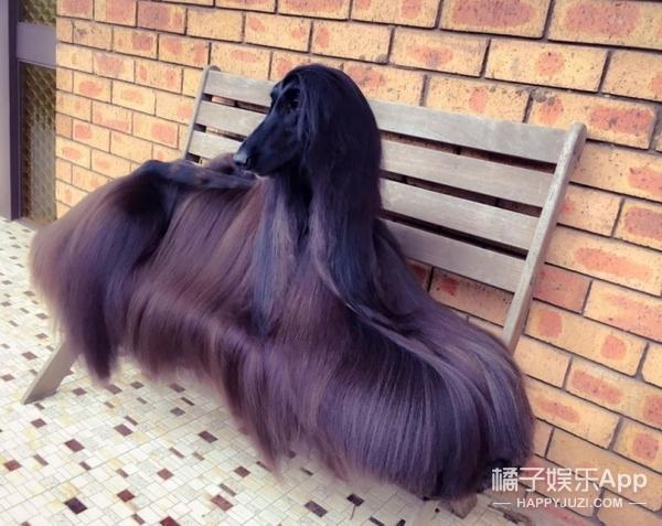 因一张生活照,这只汪获封最漂亮的狗,还成了广告界宠儿