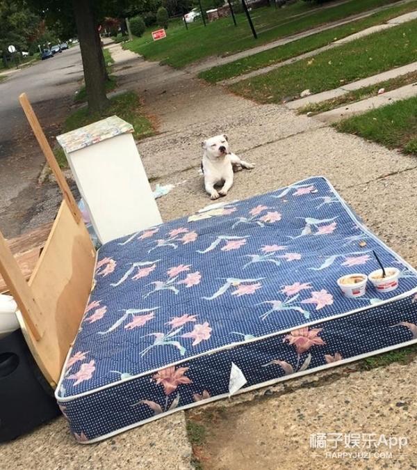 主人搬家遗弃家犬,狗狗趴在门口等了1个月...