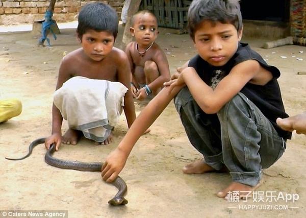 印度耍蛇人部落,小孩2岁就和眼镜蛇打交道了