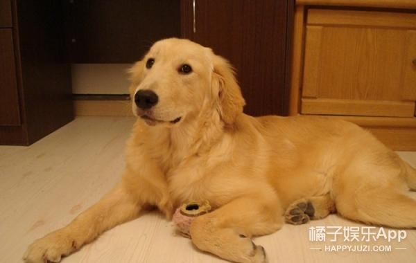 你们最爱的狗狗智商都怎样?从它们的日常生活就能看出来