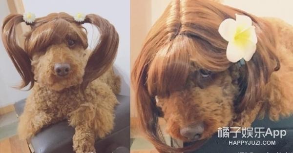 【奇葩买家秀】戴假发的汪星人总是更帅一些!