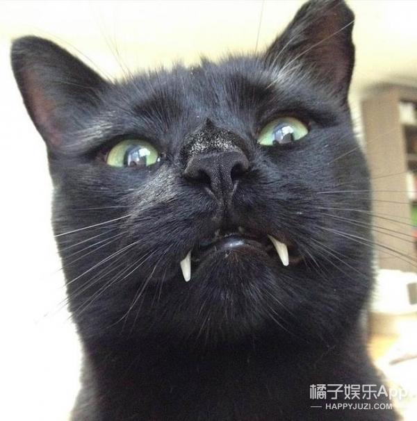 这是一只被吸血鬼附身的黑猫