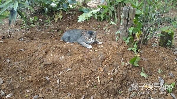 主人去世一年,忠心猫死守坟墓不离不弃
