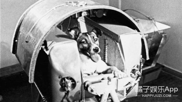 这只流浪狗被拿来当太空实验,升空后3小时就活活热死了