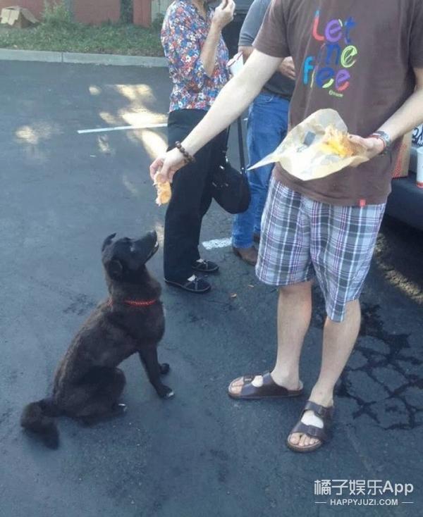 中华田园犬也有春天,这只小黑狗在美国成了万人迷