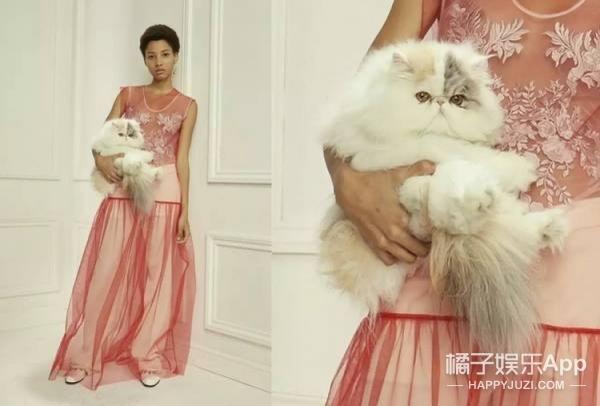 逃得过双十一却逃不过猫奴的诅咒,原来猫咪早统治时尚圈!