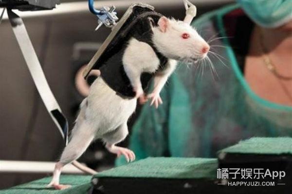 """科学家们研发出""""WI-FI大脑"""",以后出门不用再带脑子了!"""