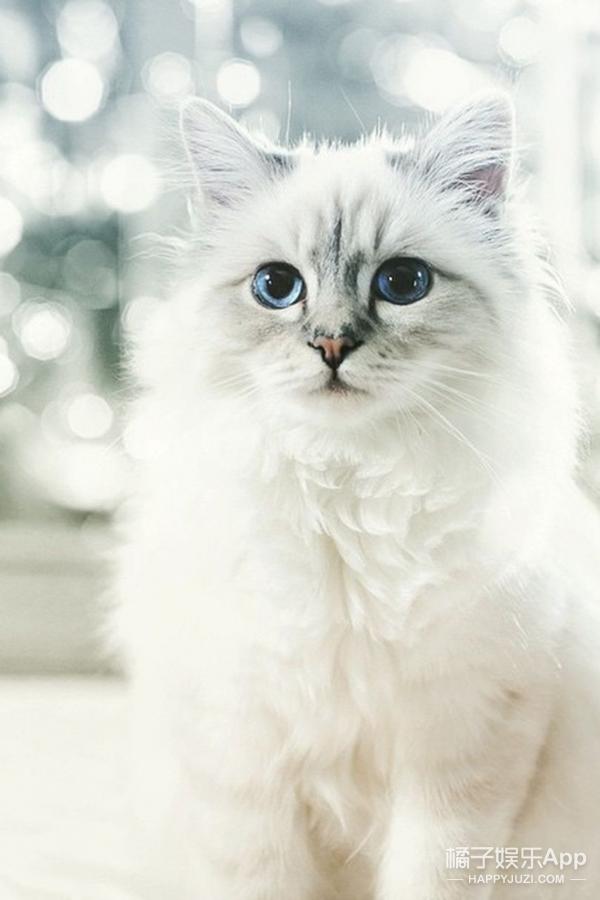 在香奈儿,卡尔大帝的终极宠妃居然是一只猫?!