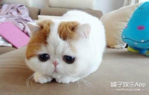 """残忍哭了!伪""""爱猫人""""日杀100只猫咪,当兔肉卖"""