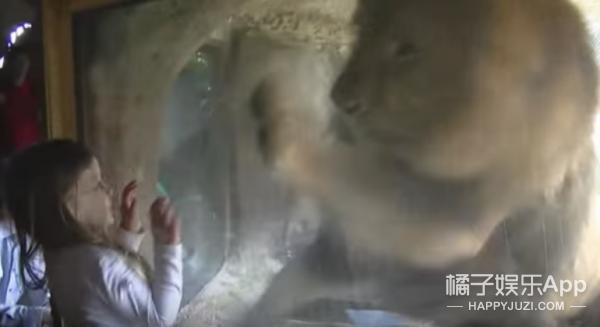 小女孩隔着玻璃亲吻狮子,没想到竟换来…